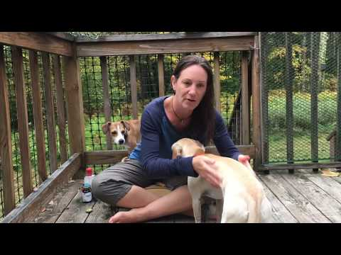 Tick Removal & Prevention for Pets