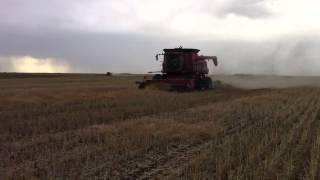 case ih 8230 and 2388 harvesting canola