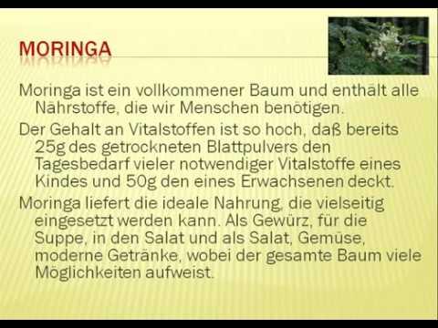 Moringabaum Endecken Sie die Möglichkeiten von Moringa Oleifera  Moringakapseln