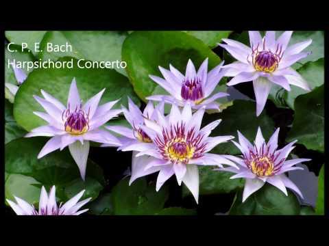 C. P. E. Bach Harpsichord Concerto in C minor Wq 31