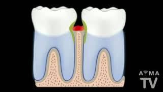 מחלות חניכיים ושיניים בחיות מחמד, איך מתמודדים איתם?
