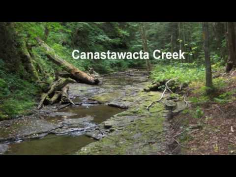 Scenes Of The Finger Lakes Trail In Chenango County