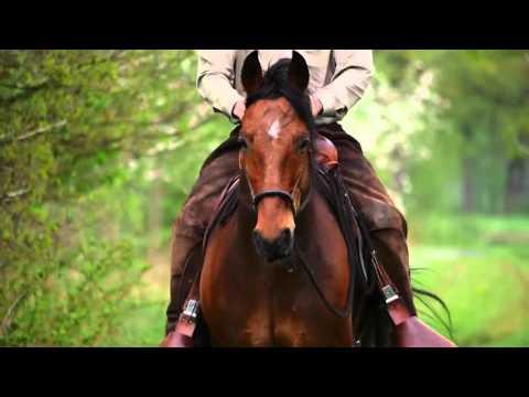Bild: Ausbildung von Pferd und Reiter, Horsemanship