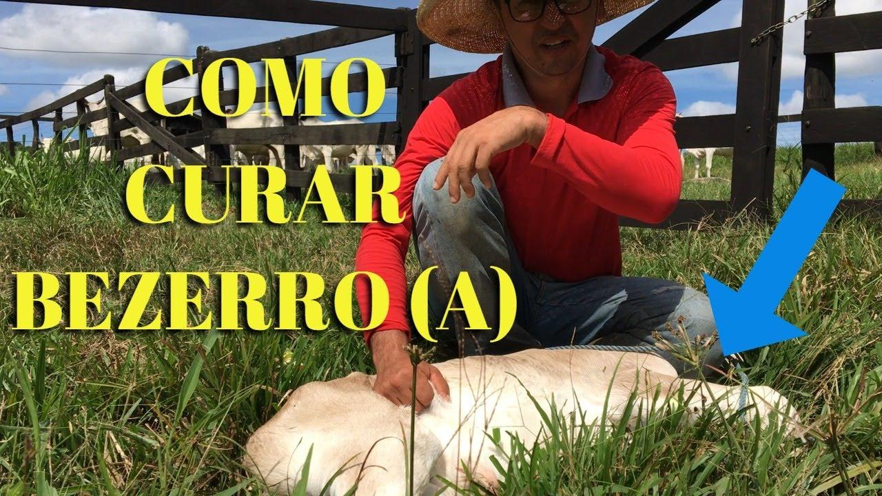 DICAS DE COMO CURAR UM BEZERRO(A)!!!