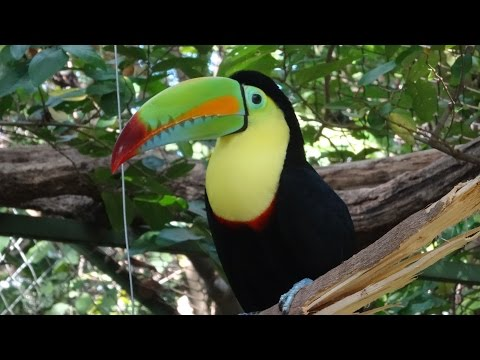 Costa Rica tour, centro de resate las pumas, animals zoo, Liberia HD