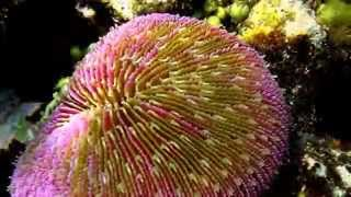 Coral Facts: 11 Facts About Coral
