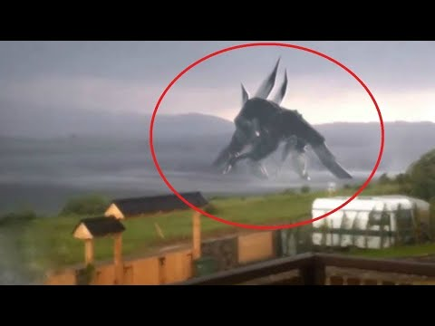 10 Giant Creatures Caught on Camera