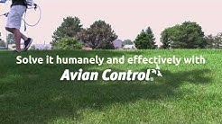 Bird Repellent Commercial Building | Non-Toxic Chemical Bird Control