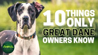10 Things Only Great Dane Dog Owners Understand