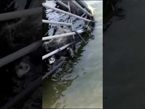 Dead Animals in water at Wollaston Beach in Quincy, MA