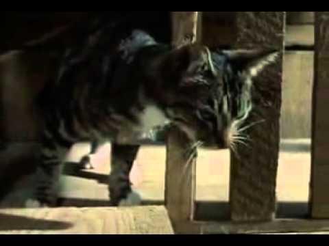 Thorndike S Cat