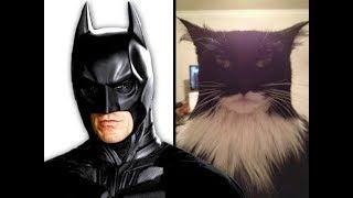Приколы с котами и кошками — Смешные животные Тест на психику 2019
