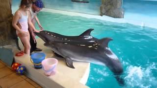 Плавание с дельфинами 2016 год.  Лазаревский дельфинарий