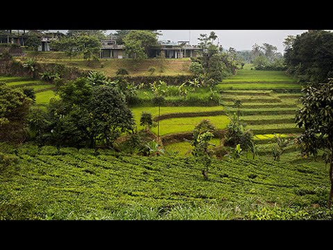Tea Garden Resort, Subang, West Java, Indonesia - Best Travel ...