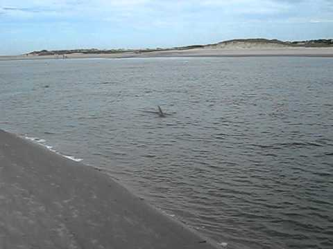 Dolphins pelicans fish at kiawah island south carolina for Kiawah island fishing