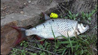 Куча рыбы в скалах Ловля Красноперки на опарыш Клёвая рыбалка в мае 2021