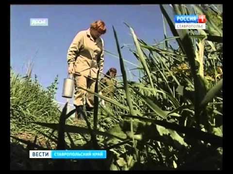 Новости - ФКУЗ Ставропольский противочумный институт
