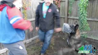 Blue Bully (pitbull), Dutch Shepherd, Knpv Donovan Pinscher, K9 Control Tv Dog Training Day