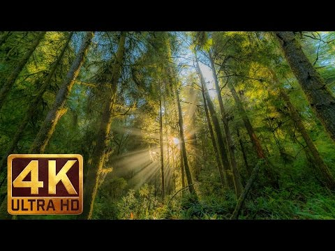 4K Virtual Nature Walk with Peaceful Music 1 Hour - Redwood National and State Parks,Hatton Trail,CA