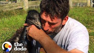 Emu Follows Her Human Dad Everywhere | The Dodo Soulmates