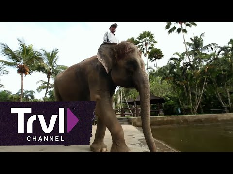 Visit Bali's Elephant Safari Park - Travel Channel