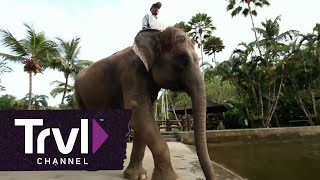 Visit Bali's Elephant Safari Park - Travel Channel