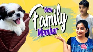 Shocking Surprise| New Family Member to Our Happy Home| Maa Shihtzu Puppy| Vlog | Sushma Kiron
