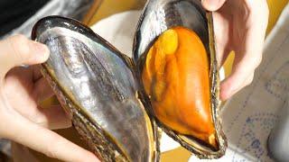 突然変異?市場でたまたま見つけた、巨大化しすぎた『ムール貝』のお味がすごかった・・・