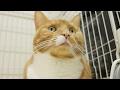 cute cat in good mood / 【猫 かわいい】ご機嫌な表情の猫