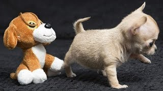 Cute is Not Enough - Funny Cats and Dogs Compilation #95