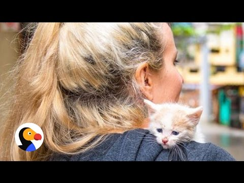 Kitten Lady Rescues Cat During Vacation | The Dodo