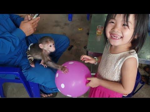 Baby Monkey | Doo's So Friendly With Everyone - Funny Animals