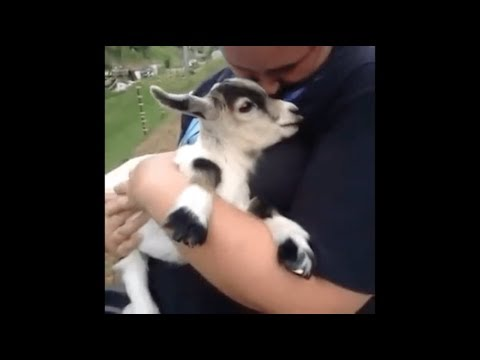 wholesome animal vines that cured my anxiety