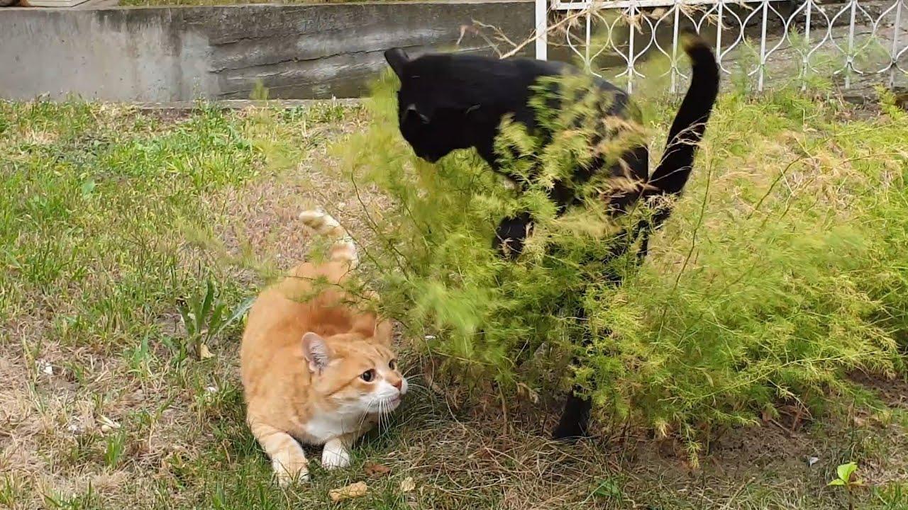 Funny Cat Ambush