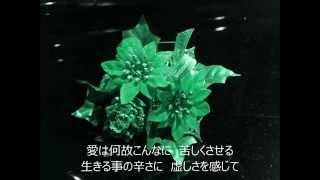 vocal MIYUKI 作詞 清水達文 作曲 多城康二 編曲&ドラム 杉浦邦弘 アメ...