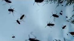 Maa ampiaispesä