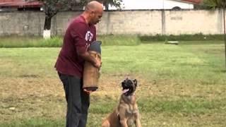 Domador de perros en José María Morelos, Quintana ROO