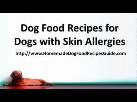 Dog Food Recipes for Dogs with Skin Allergies