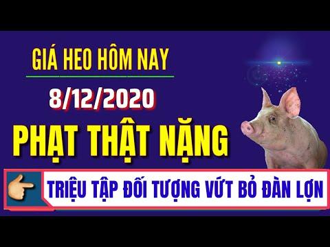 Giá heo hơi hôm nay ngày 8/12/2020 | Giá lợn hơi điều chỉnh nhẹ tại miền Trung và miền Nam