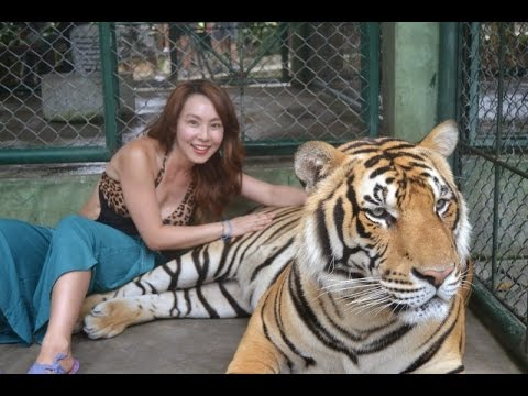 Sriracha tiger show pattaya youtube - Show me a picture of the tiger ...