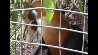 Papua Nova Guinea, quarta part