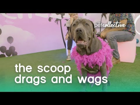 Drags & Wags | The Scoop
