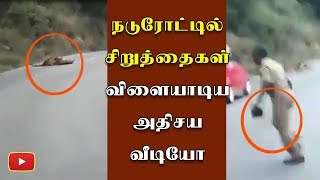 Two Panther playing in Highway video - Tamil Nadu | Erode | Sathiyamangalam | Bhavani