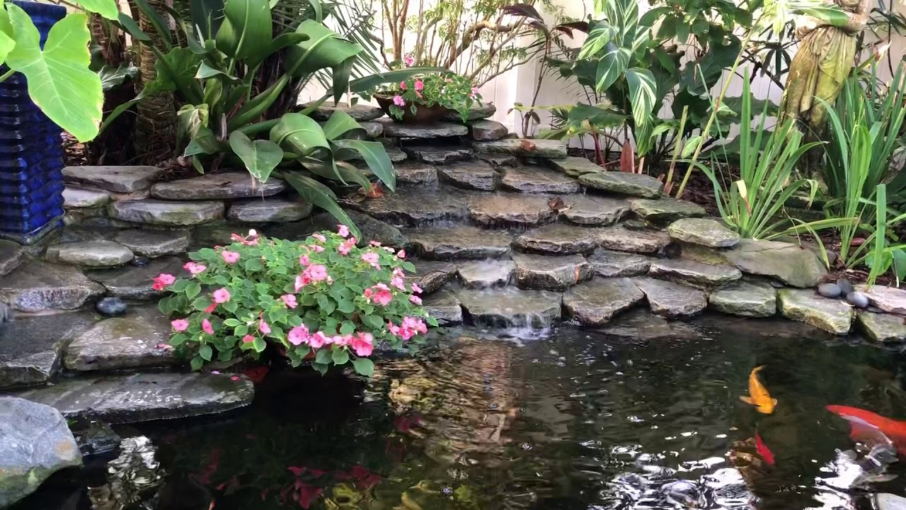 Backyard pond - YouTube