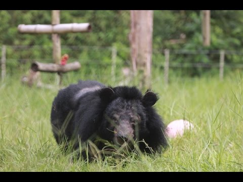 "Kay, ""the most beautiful bear in the world"" beats her demons to walk on grass"