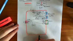 Ussing Chambers Part 1
