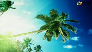 "3D фотообои ""Пальма на пляже"""