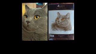 Обзор. Набор для вышивания Британский кот.