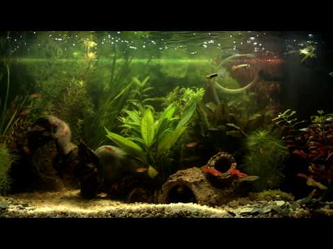 AQUARIUM ★ Beautiful South American Tank ★ 1 HOUR ★ RELAXING ★ Screensaver