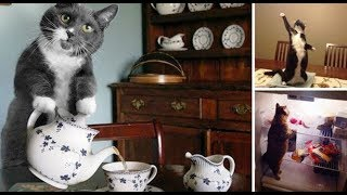 7 Cats Who Think They're People!